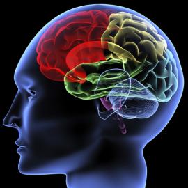 Visualisierung Gehirn
